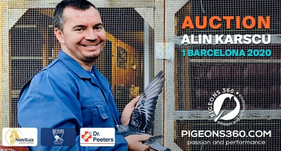 Licitatia columbofila a lui Alin Karscu doboara toate recordurile din Romania