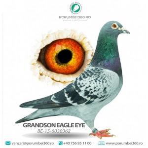 GRANDSON EAGLE EYE
