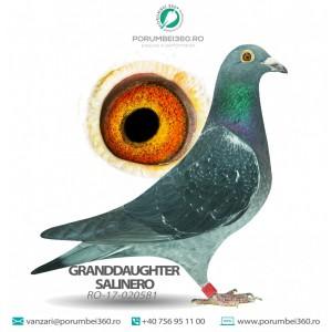 GRANDDAUGHTER SALINERO