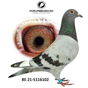 INBRED BOLD EAGLE